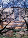 桜舐めの病院