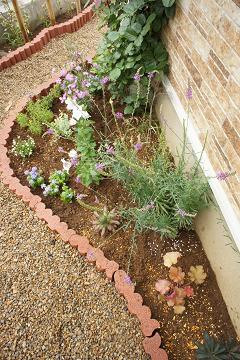 花壇全体20110617