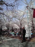 城北公園お花見①