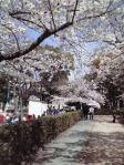 桜ノ宮公園お花見①
