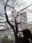 桜ノ宮公園お花見②
