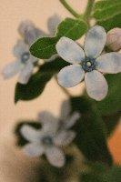 20120623ピュアブルー