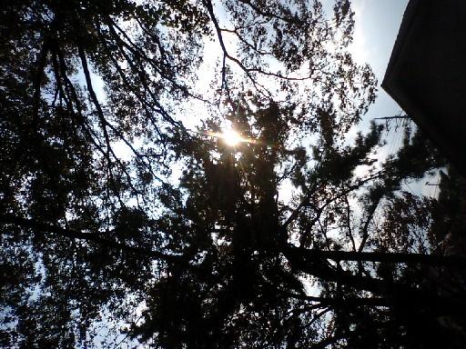 1009tree2.jpg