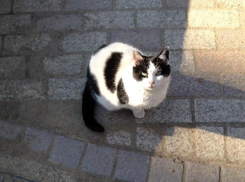 cat0109.jpg