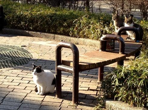 cat010901.jpg