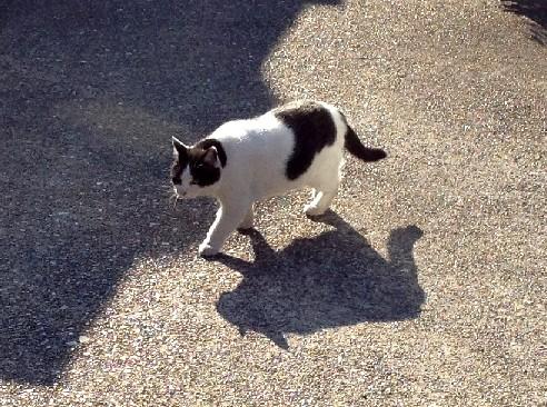 cat010902.jpg