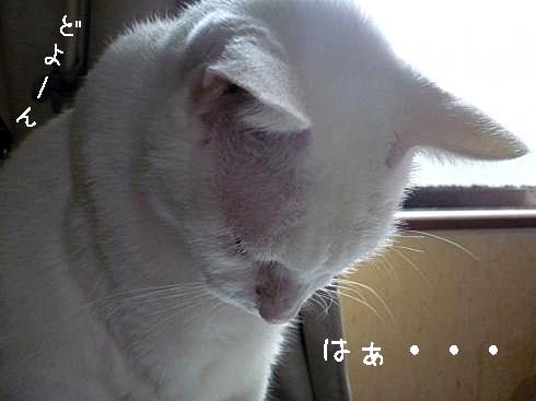 ぶーちゃん2