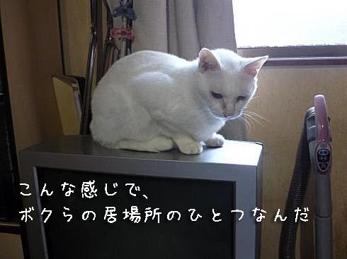 ぶーちゃん3