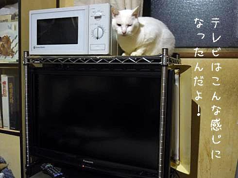 テレビ全景