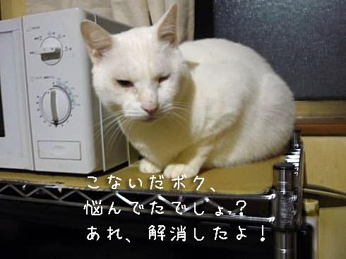 ぶーちゃん1