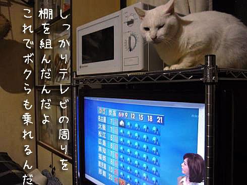 テレビ全景2