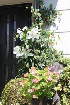 玄関のカサブランカ1