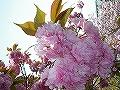 2010_0418_121006-IMGP0363.jpg