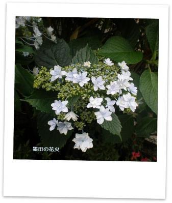 墨田の花火1