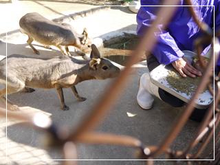 zoo2014-05.jpg
