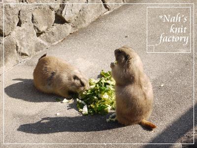 zoo2014-07.jpg