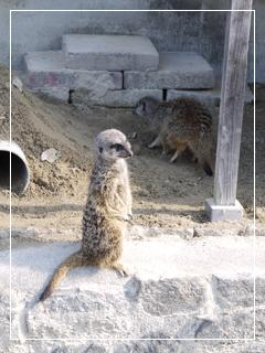 zoo2014-08.jpg