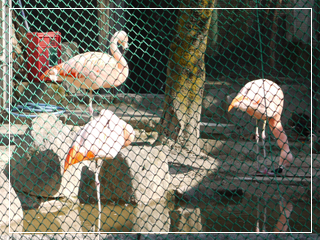 zoo2014-09.jpg