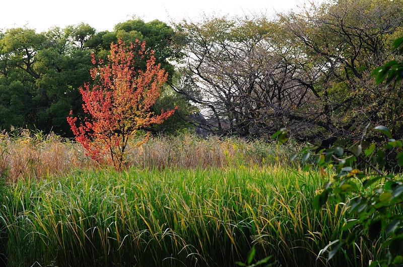 下池立ち木の紅葉_