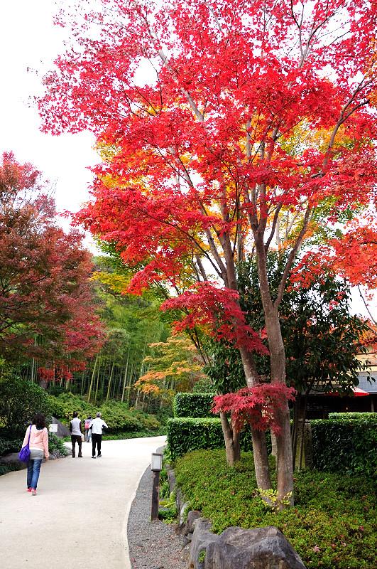 庭園紅葉17_