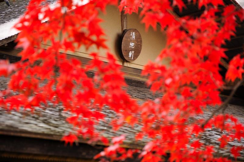 庭園紅葉12_