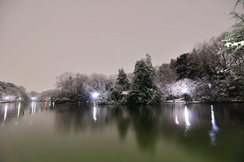 善福寺池雪2_