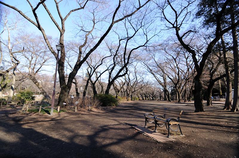 井の頭公園2_