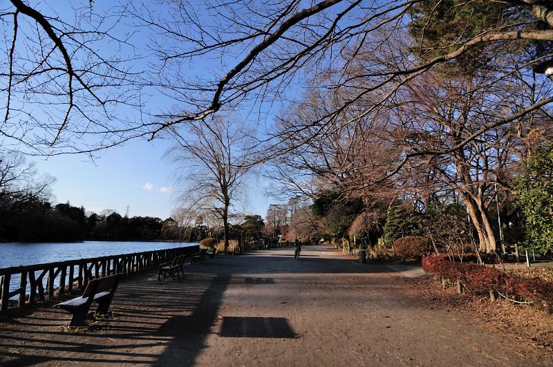 陽のあたる池畔_