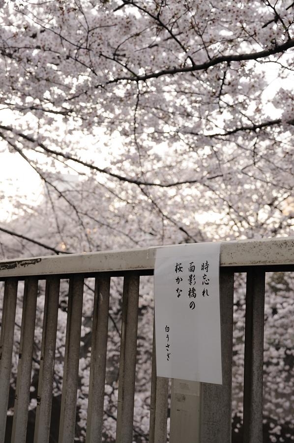 神田川8_