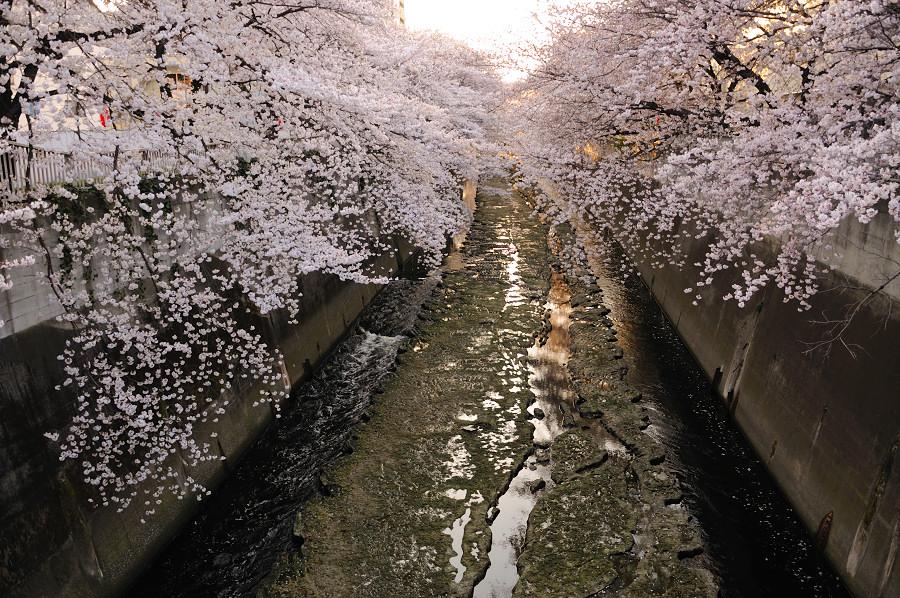 神田川6_