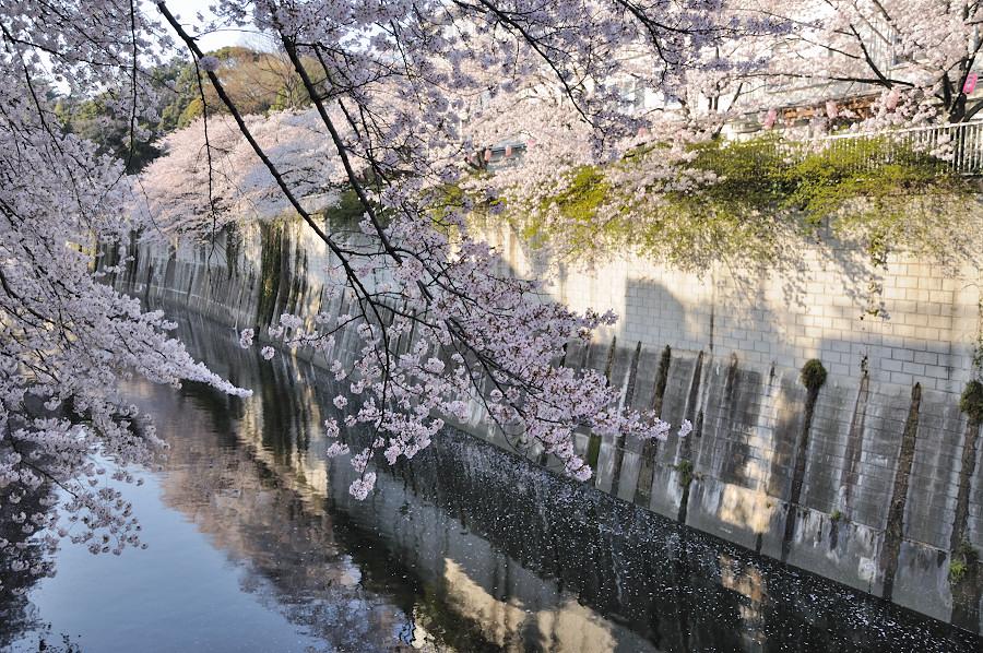 神田川1_