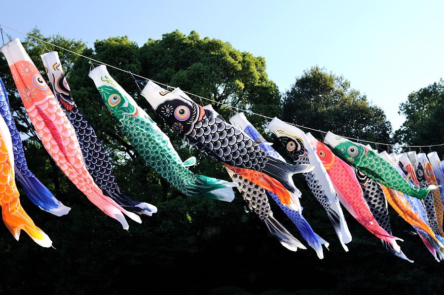 鯉のぼり2_