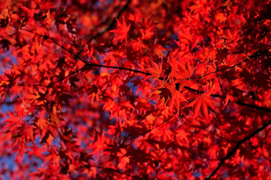 日本庭園__02