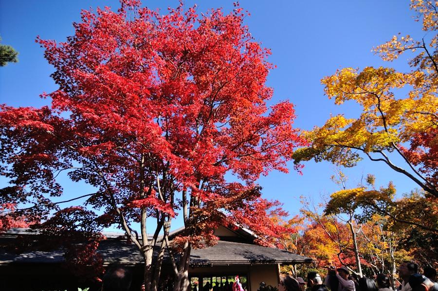日本庭園__04
