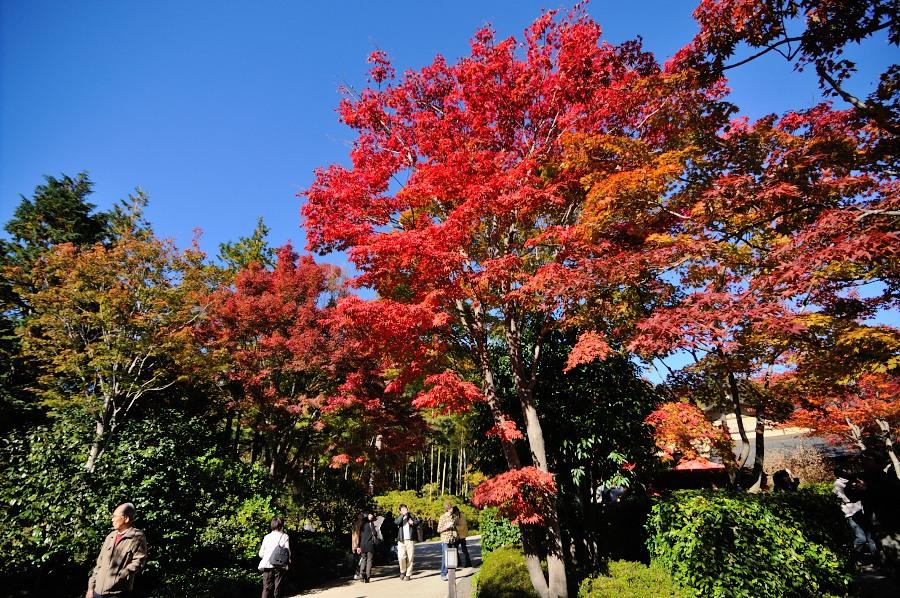 日本庭園__03