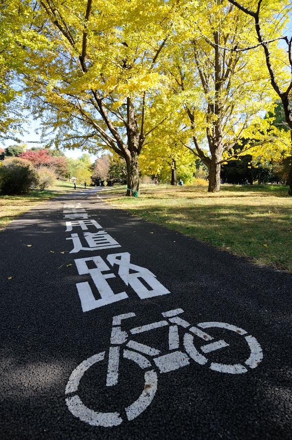 イチョウと自転車道_