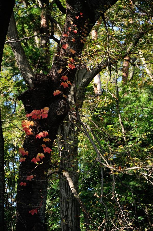 赤い葉と樹_