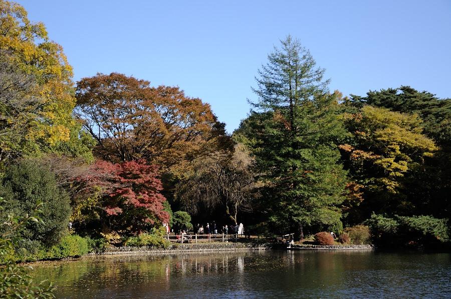 庭園の池_
