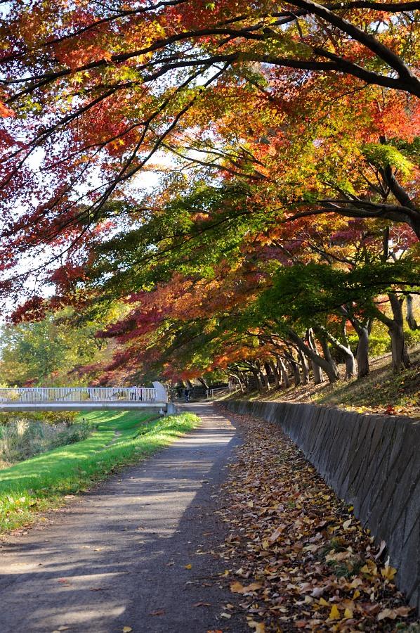 武蔵野公園__04