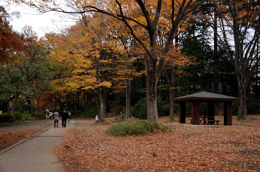 石神井公園__08