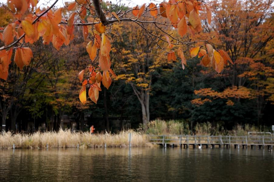 石神井公園__09