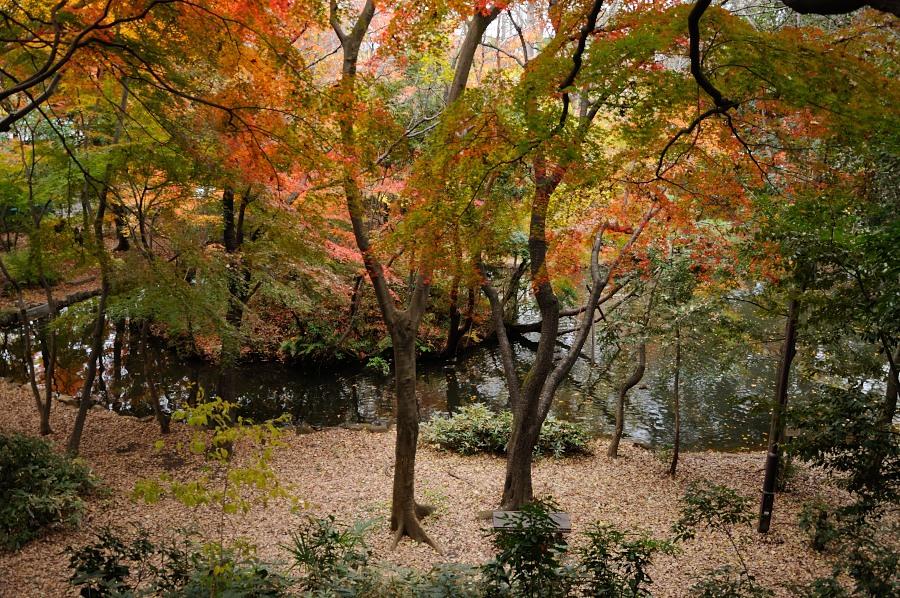石神井公園__10
