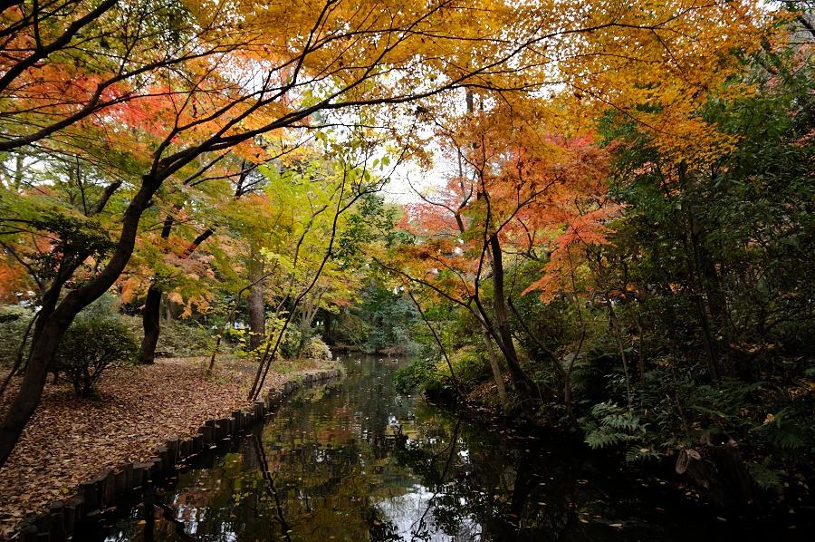 石神井公園__11