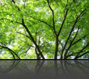 i_tree_woods2.jpg
