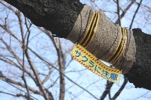 2009/02/14 上北沢 サクラに注意