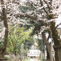 2010_0331 東府中c