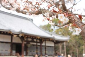 2010_0325 仁和寺