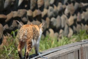 2010_0425 福生 b