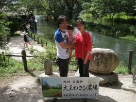 2012wasabi1.jpg