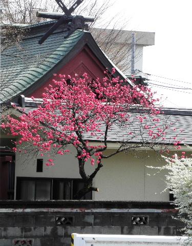 横山橋近くの神社